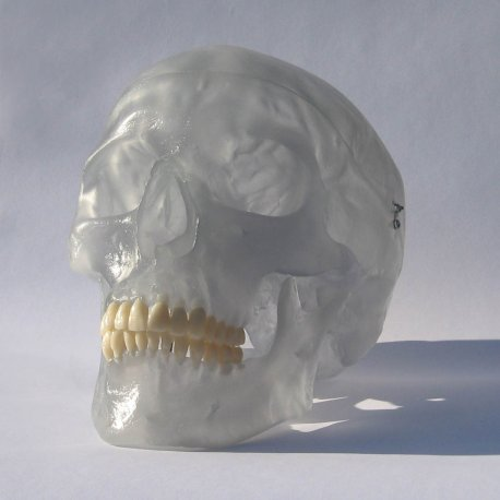 Model lidské lebky - neonový