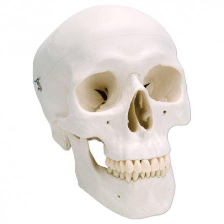 Lebka klasická - základní - 3 části