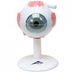 PŮJČOVNA Model lidského oka - třikrát zvětšeno - 6 částí