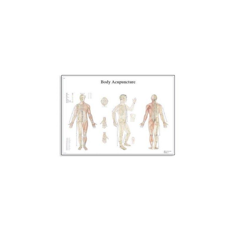 Schéma - akupunkturní body