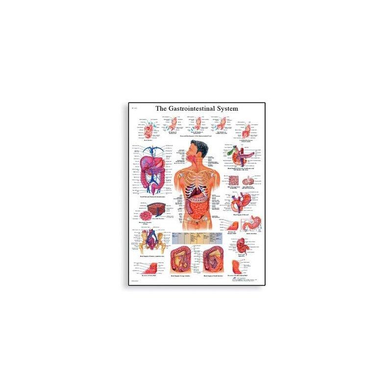 Schéma - lidský trávící systém - 50x67 cm