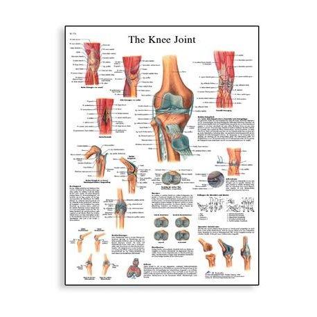 Schéma - lidský kolenní kloub - 50x67 cm