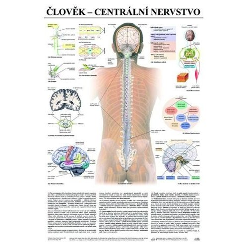 Schéma - lidské centrální nervstvo - CZ - 67x96 cm