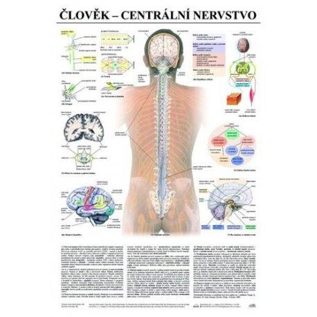 Schéma - lidské centrální nervstvo