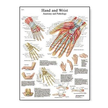 Schéma - lidská ruka a zápěstí - 50x67 cm