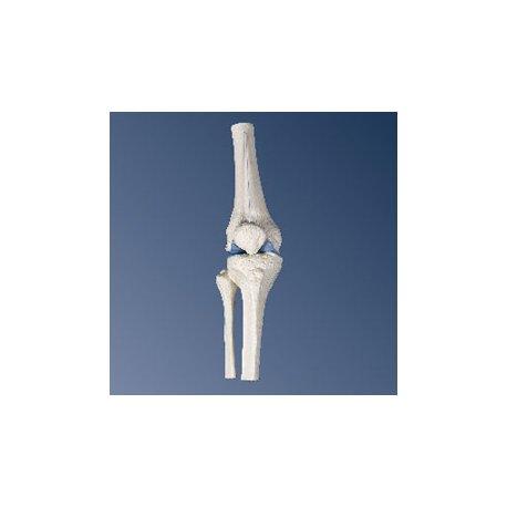 Kloub kolenní mini - bez podstavce