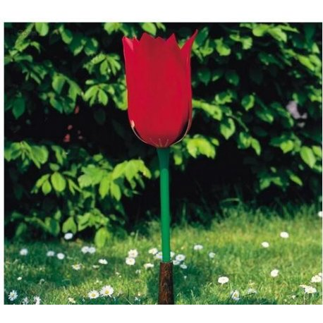 Tulipán záhradní - Tulipa gesneriana