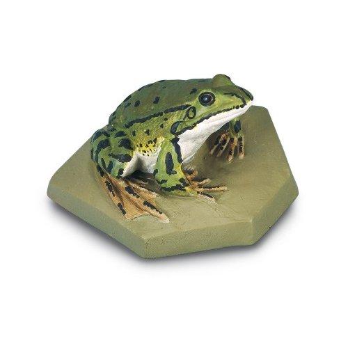 Skokan zelený - Rana esculenta