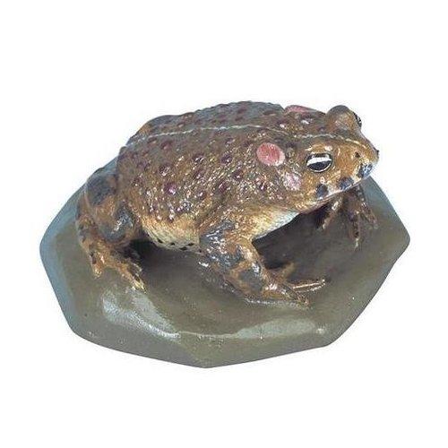 Ropucha krátkonohá - Bufo calamita - Doprodej