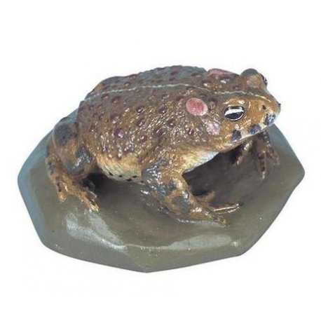 Ropucha krátkonohá - Bufo calamita