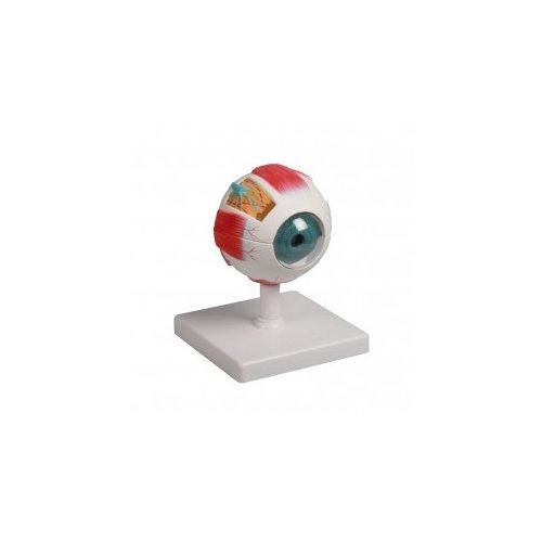 Model lidského oka - čtyřikrát zvětšeno - 6 částí