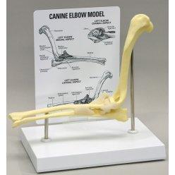 Model loketního kloubu psa domácího