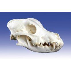Model lebky psa - velký