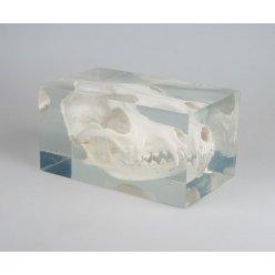 Model lebky psa v plastovém obalu