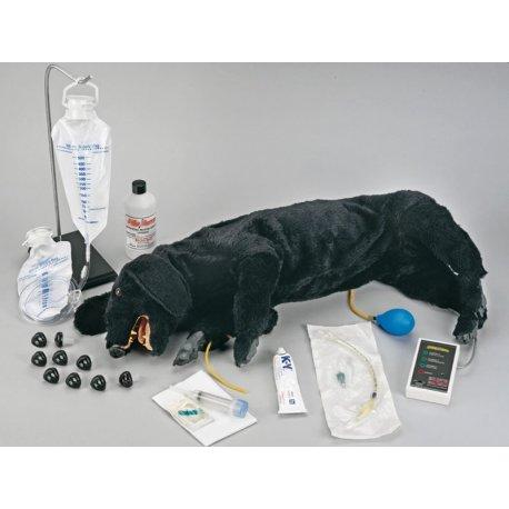 Model psa pro CPR - rozšířené provedení
