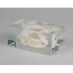 Model lebky kočky v plastovém obalu