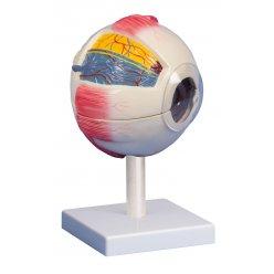 Model lidského oka - šestkrát zvětšeno - 6 částí