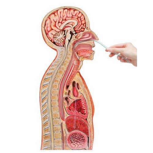 Simulátor k provádění nasogastrické intubace