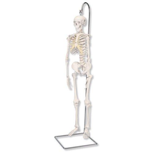 Mini model lidské kostry - na závěsném stojanu