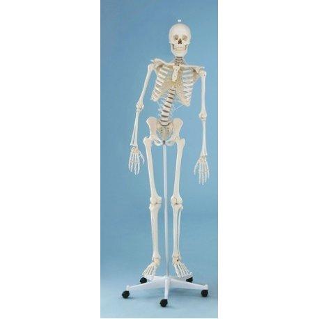 Model kostry člověka s pohyblivou páteří - na pojízdném stojanu