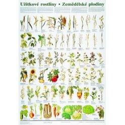Schéma - užitkové rostliny - zemědělské plodiny - CZ