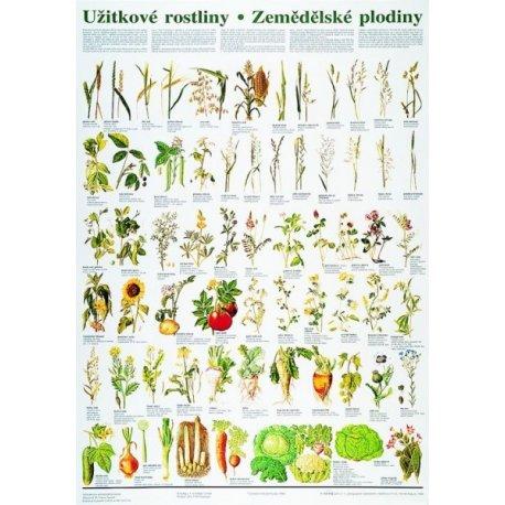 Schéma - užitkové rostliny - zemědělské plodiny - CZ - 67x96 cm