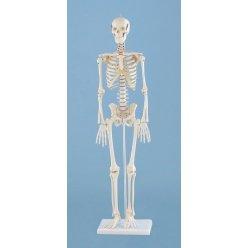 Mini model kostry člověka