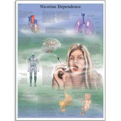 Schéma - závislost na nikotinu - AJ - 50x67 cm