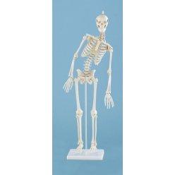 Mini model kostry člověka - s pohyblivou páteří