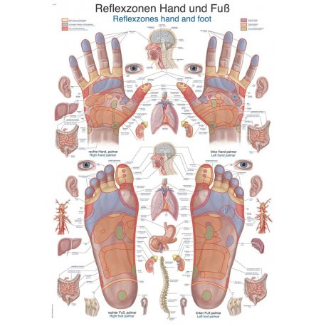 Schéma - reflexní zóny - ruce a chodidla