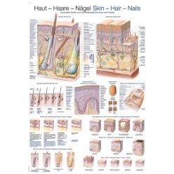 Schéma - struktura kůže a kožních derivátů