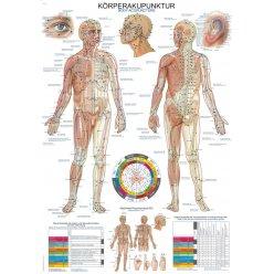 Schéma - akupunkturní body těla