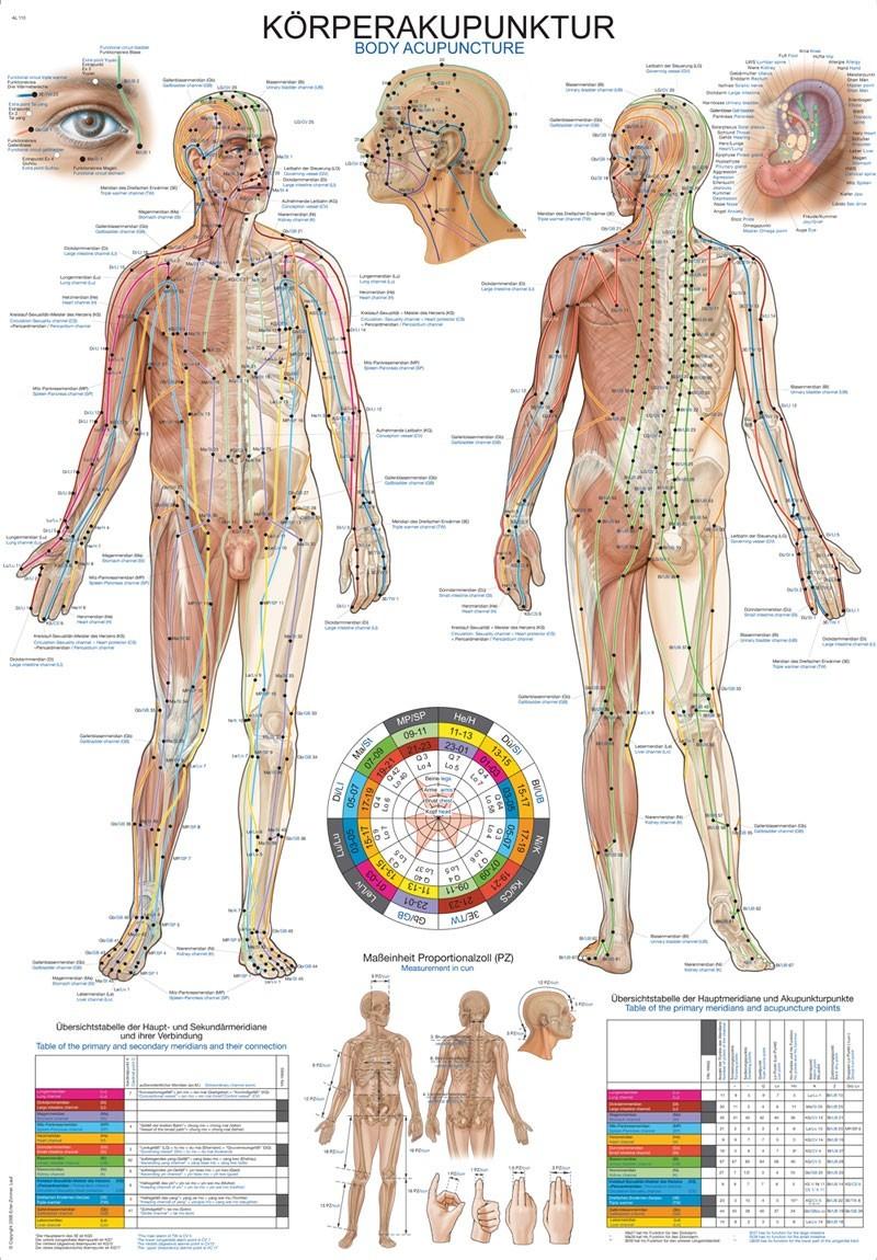 Schema Akupunkturni Body Tela