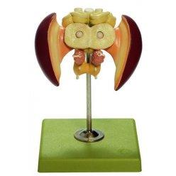 Model včelího mozku