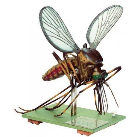 Model komára - Culex pipiens