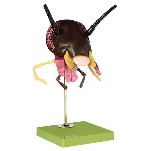 Model hlavy švába - Periplaneta americana