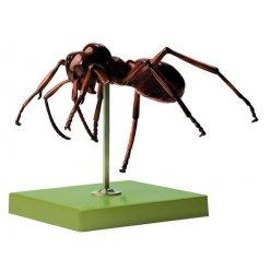 Model mravence - Formica polyctena