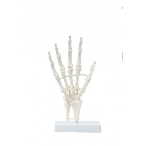 Model ruky člověka
