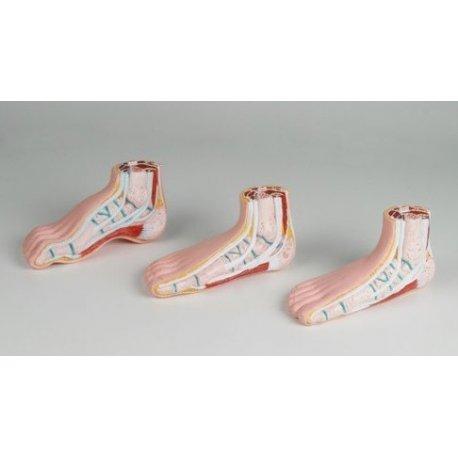 Mini model lidských nohou