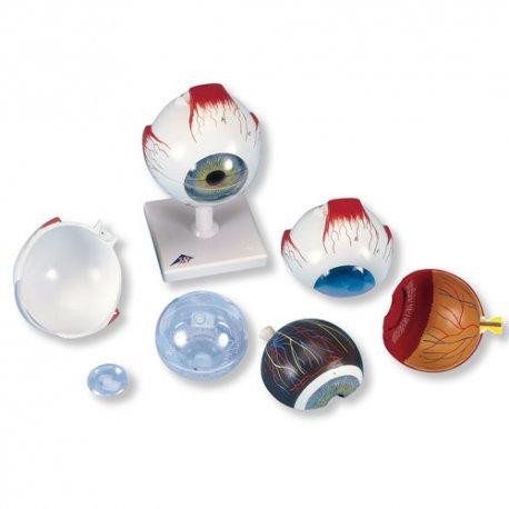 Model oka - pětkrát zvětšeno - 6 částí