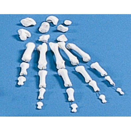 Model lidské ruky - nesestaveno