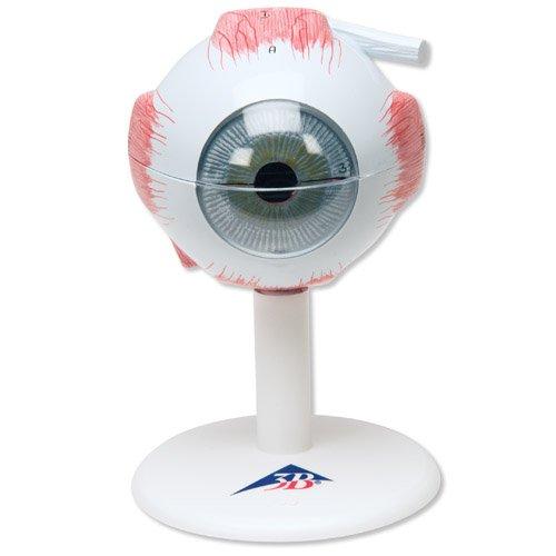 Model lidského oka - třikrát zvětšeno - 6 částí