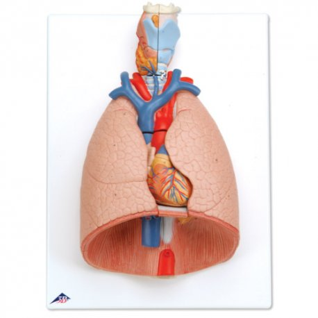 Model plic s hrtanem - 7 částí