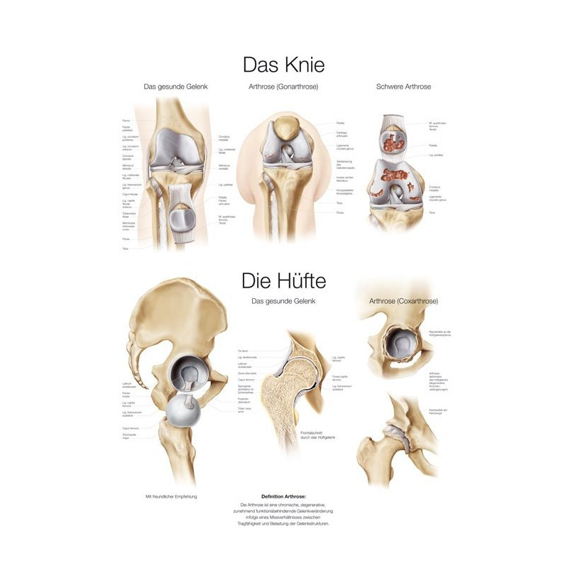 Schéma - anatomie lidské pánve a kolene