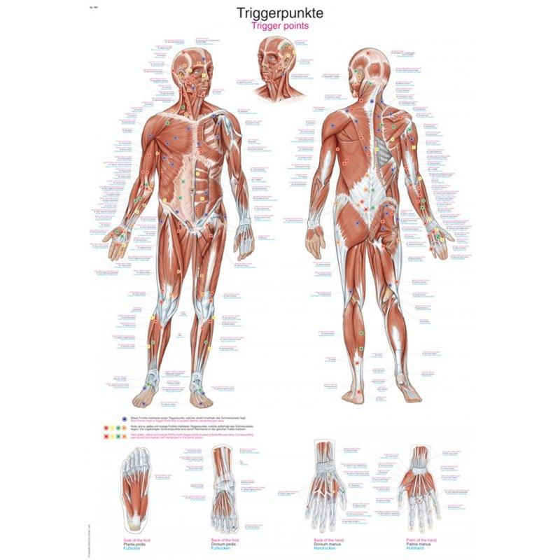 Schéma - aktivní body lidského těla