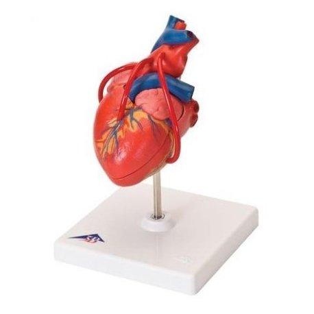 Klasický model srdce s bypassem - 2 části