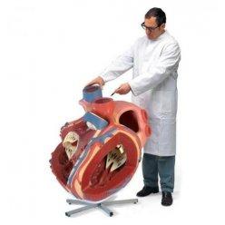 Model lidského srdce - osminásobek skutečné velikosti