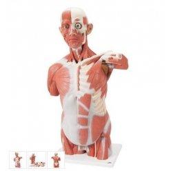Torzo svaloviny člověka - 27 částí