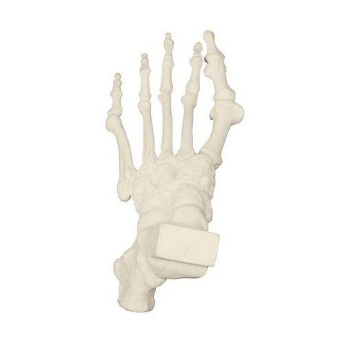Model lidské kostry nohy - patologický - ORTHObones