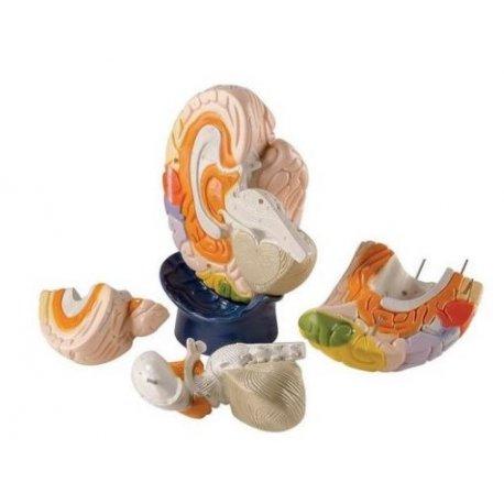 Obří model lidského mozku - 4 části